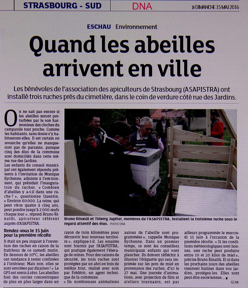 Article Eschau Abeill 39 En Ville Installation Des Ruches