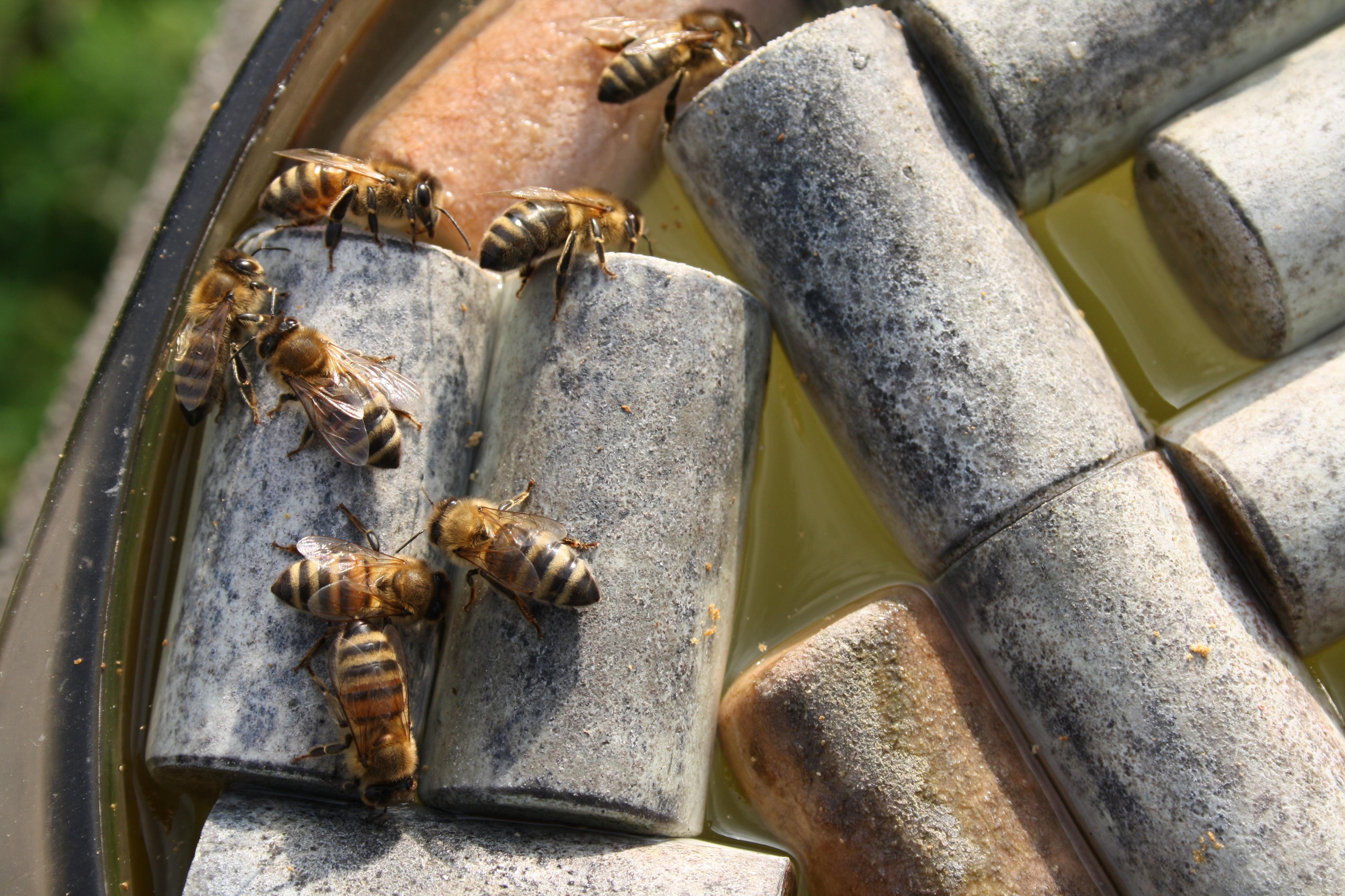 M me en hiver les abeilles ont soif asapistra - Qu est ce qui fait fuir les abeilles ...